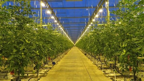 参考:太陽光植物工場